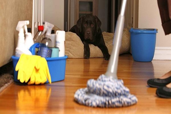 تنظيف مجالس بخميس مشيط